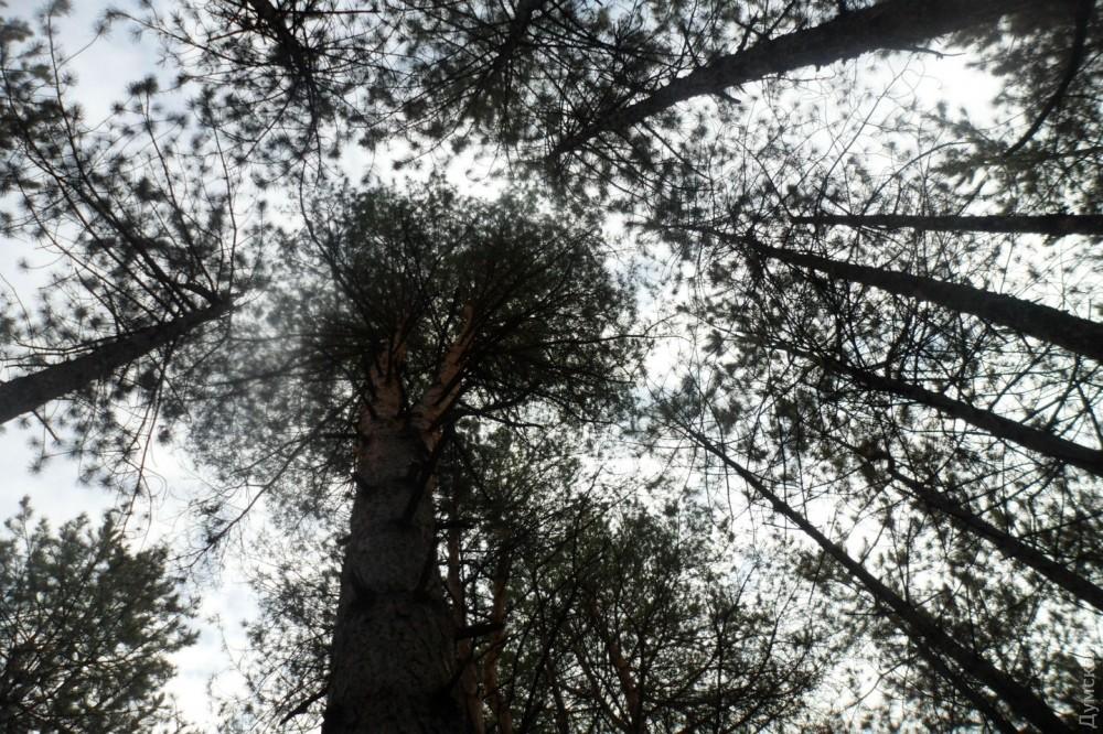 Для уставших от моря: Савранский лес